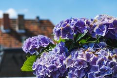 Bunch of beautiful lilac flowers closeup with blue sky in background stock photo