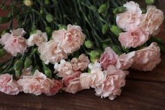 Bunch of Beautiful Pink Carnation Flowers Closeup on Wood Background stock images