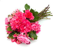 Bunch of beautiful pink garden roses Stock Photo