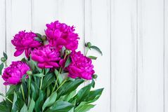 Pink peony flowers on white vintage wooden table. Flat lay, top view with place for text stock photography