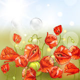 Bunch of Beautiful Red Poppy with Lights. Stock Image