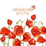 Bunch of Beautiful Red Poppy vector illustration Royalty Free Stock Photography