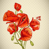 Bunch of Beautiful Red Poppy vector illustration Royalty Free Stock Photo