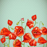 Bunch of Beautiful Red Poppy vector illustration Stock Photos