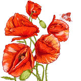 Bunch of Beautiful Red Poppy vector illustration Royalty Free Stock Images