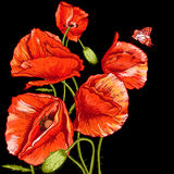 Bunch of Beautiful Red Poppy vector illustration Royalty Free Stock Image