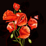 Bunch of Beautiful Red Poppy vector illustration Stock Photo