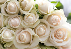 Bunch of beautiful  roses Royalty Free Stock Photo