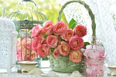 Bunch of beautiful roses in wicker basket. And vintage bird cages standing in window on sunny day Stock Images