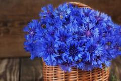 A bunch of beautiful summer flower of Cornflower in the basket. Stock Images