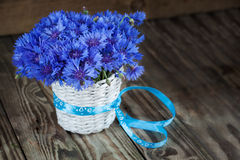 A bunch of beautiful summer flower of Cornflower in the white bu Royalty Free Stock Image