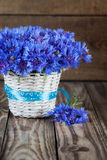 A bunch of beautiful summer flower of Cornflower in the white bu Royalty Free Stock Images