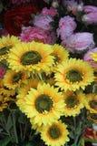 A bunch of beautiful sunflower Stock Photo