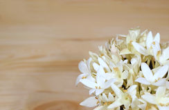 Bunch of beautiful white Millingtonia flowers on light brown wooden table, with free space for text. And design Royalty Free Stock Image