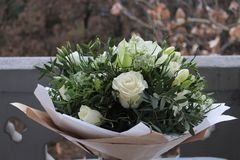 Beautiful white roses royalty free stock images