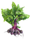 Bunch of Beetroot. Bunch of fresh, healthy beetroot, isolated on white stock images