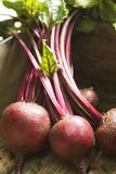 Bunch of beetroot Royalty Free Stock Image