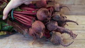 Bunch Of Beetroots stock video