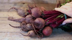 Bunch Of Beetroots stock footage