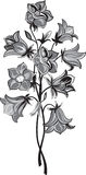 Bunch of bell flower. Black and white style Stock Image