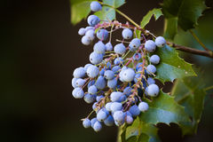 Bunch of berries Stock Photography