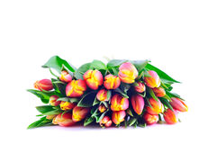 Bunch of Bicolor Orange-Yellow Tulips Royalty Free Stock Images