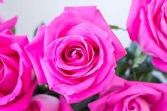 Bunch of big pink rose Stock Photos