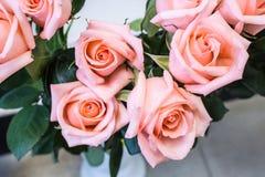 Bunch of big pink tea rose Stock Photos
