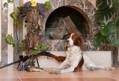 Bunch of birds, hunting dog and rifle on background of the fireplace. Bunch of birds, hunting dog and rifle on background of the fireplace, horizontal, indoors stock photo