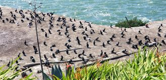 Bunch of birds resting near the water stock photos