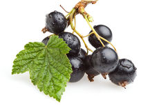 Bunch of black currant berries Stock Image