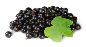 Bunch Of Black Currant With Leaf Rotated Royalty Free Stock Images