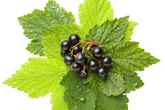 Bunch of black currant on leaves Royalty Free Stock Photography