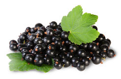 Bunch Of Black Currant With Two Leafs Stock Images