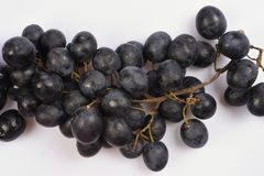 A bunch of black fresh grapes with a thin brown stem on a white background. Bunch of black fresh grapes with a thin brown stem on a white background Royalty Free Stock Image