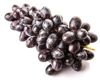 A Bunch Of Black Grapes Fruit V Stock Photography