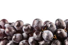 Bunch Of Black Grapes Fruit VII Royalty Free Stock Photography