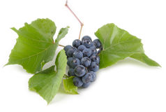 Bunch of Black Grapes on green leaf Stock Photography
