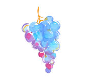 Bunch of black grapes watercolor illustration. Royalty Free Stock Photography