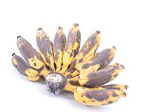 Bunch of Black Ripen Wild Banana. Asian Banana or Cultivated Banana isolated on white background Royalty Free Stock Photo