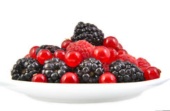 Bunch of blackberries, red currants and Stock Image