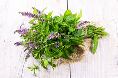 Bunch blooming mint Stock Photography