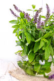 Bunch blooming mint Stock Images