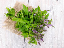 Bunch blooming mint Stock Photos