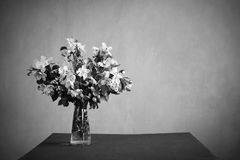 Bunch of blooming twigs in monochrome Stock Photography