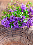 Bunch of a blossoming thyme Stock Photo