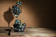 A bunch of blue dark grapes and a wine glass on a dark background in the conditions of artificial hard lighting close up. In a gla. Ss of grapes Stock Photography