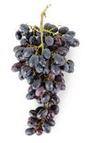 Bunch of blue grapes Royalty Free Stock Photos