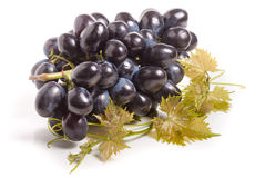 Bunch of blue grapes with leaf isolated on white background Stock Photos
