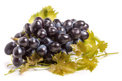 Bunch of blue grapes with leaf isolated on white background Royalty Free Stock Photos